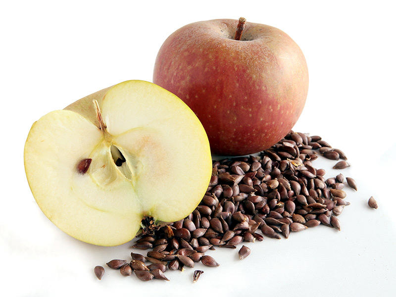 Apple Seeds and Cancer