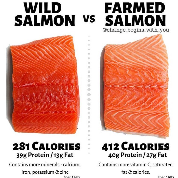 Farmed Salmon vs wild salmon